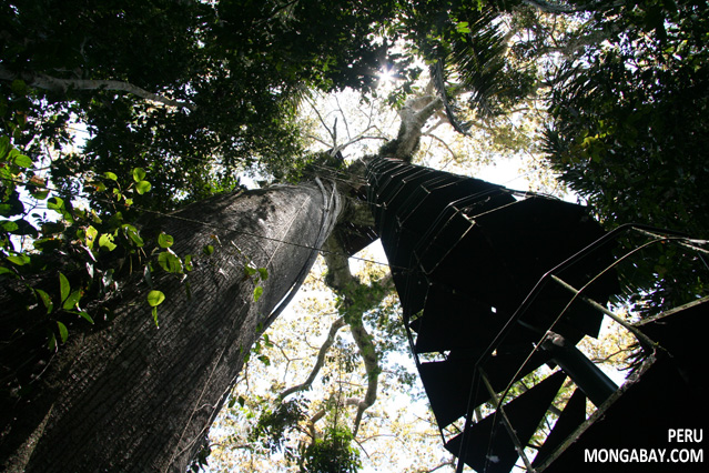 Spiral staircase leading up to a canopy observatory in Peru