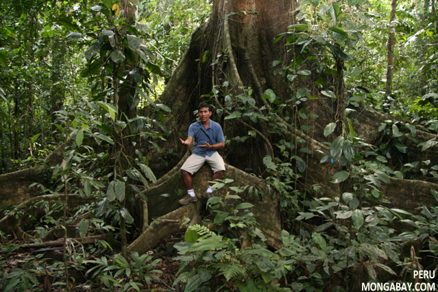 Oscar Mishaja, rainforest guide in the Tambopata region