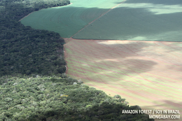 Amazon forest and soy in Brazil