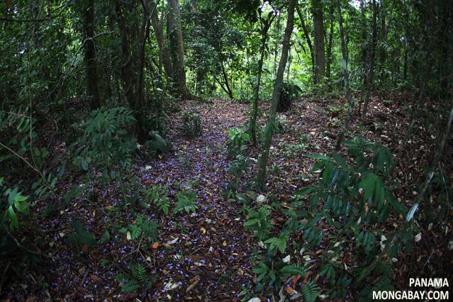 The Effect of Soils on Biodiversity