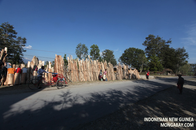 Wood harvest in Indonesian New Guinea