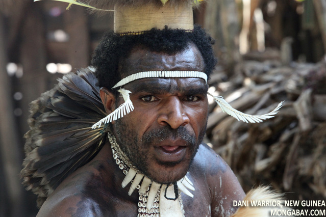 Dani man in Indonesian New Guinea