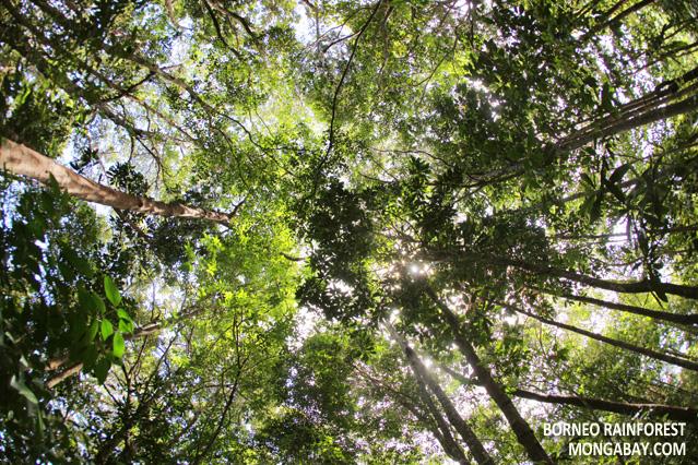 & Rainforest Canopy Structure