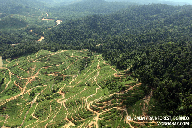 Deforestation for oil palm in Malaysian Borneo