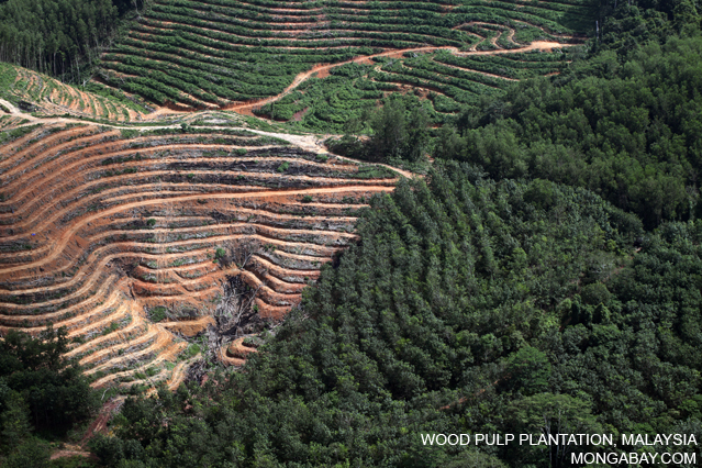 Acacia plantation in Borneo