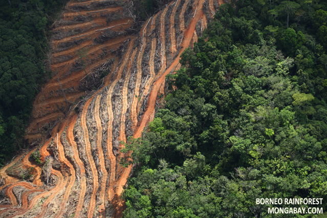 Clear-cutting in Borneo
