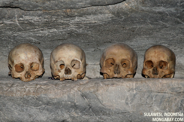 Human skulls in cave at Londa Nanggala