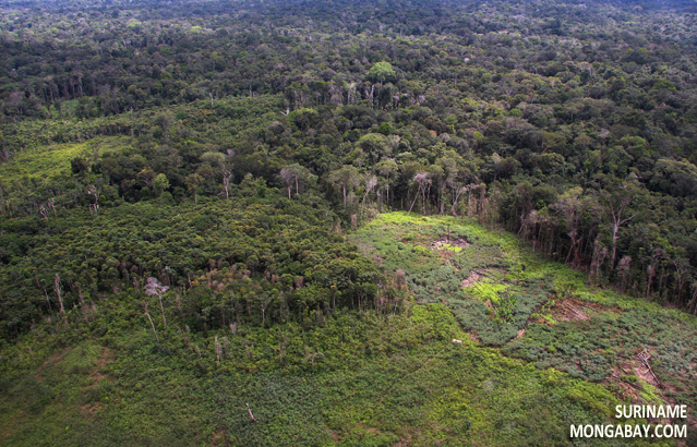 Shifting cultivation in the Suriname rainforest
