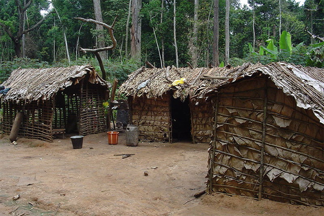 Pygmy house made with sticks and leaves in northern Republic of the Congo