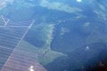 Oil palm on peatland -- sabah_0056