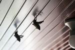 Bats -- sabah_0107