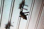 Bats -- sabah_0109