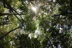 Sapi Island forest