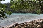 Sapi Pulau