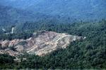 Loss of rainforest in Borneo