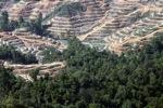 Menebang hutan hujan di Kalimantan