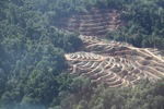 Lowland forest loss in Malaysian Borneo
