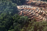 Lowland forest loss in Borneo