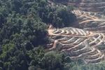Hutan dataran rendah kerugian di Malaysia