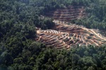 Loss of lowland rainforest in Sabah, Malaysia