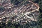 Deforestasi di Kalimantan Malaysia