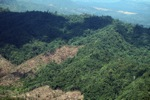 Forest loss in Sabah, Malaysia -- sabah_0383