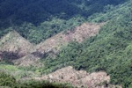 Loss of rainforest in Malaysian Borneo