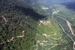 Oil palm plantation -- sabah_0457