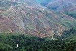 Hilangnya hutan di Sabah, Malaysia