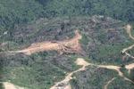 Chopping down rainforest in Malaysian Borneo -- sabah_0539