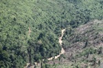 Chopping down rainforest in Malaysia -- sabah_0543