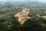 Oil palm plantation -- sabah_0559