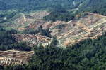 Deforestation for oil palm -- sabah_0736