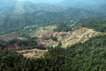 Deforestation for oil palm -- sabah_0737