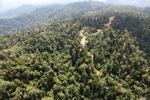 Logging road -- sabah_0745