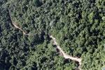 Logging road -- sabah_0754