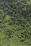Borneo rainforest -- sabah_0778