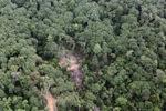 Logging road -- sabah_0780