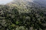 Borneo rainforest -- sabah_0851