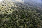 Borneo rainforest -- sabah_0859
