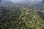 Oil palm plantation -- sabah_0925