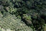 Perkebunan kelapa sawit