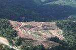 Deforestasi untuk minyak sawit