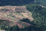 Deforestation for oil palm -- sabah_1074