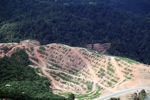 Deforestation for oil palm -- sabah_1085