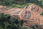 Deforestation for oil palm -- sabah_1104