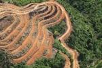 Deforestation for oil palm -- sabah_1115