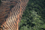 Deforestation for oil palm -- sabah_1139