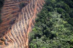 Deforestation for oil palm -- sabah_1142