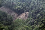 Deforestation for oil palm -- sabah_1186